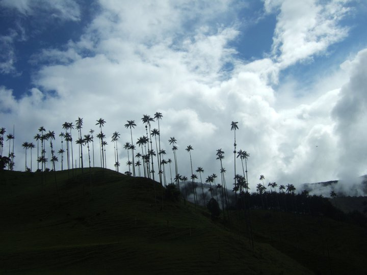 The Valley and its Palms.