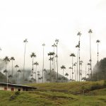 VIDEO: Heard of Cocora Valley in Colombia? Take a look at its otherworldly scenery…
