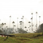 Palms and Willies: Colombia's Spectacular Cocora Valley.