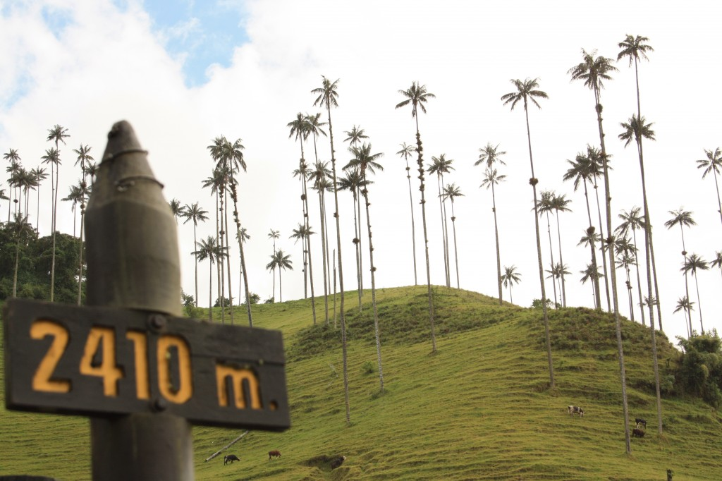 The stunning Cocora Valley