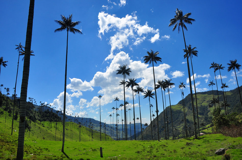 Cocora Valley, Salento