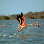 Bird Watching in Colombia: the best in the world?!