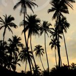 The Paradise You've Been Searching For: Tayrona National Park