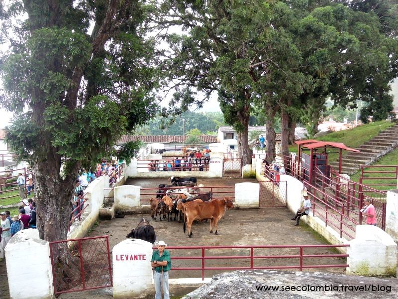 On the first Tuesday of every month, Tamesis, Antioquia holds a livestock fair