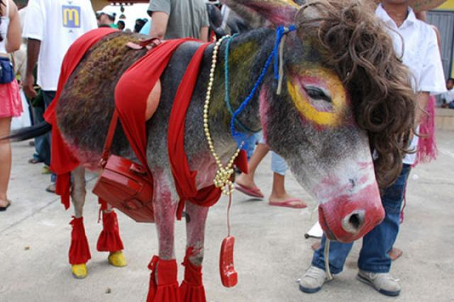 Image result for colombia donkey festival