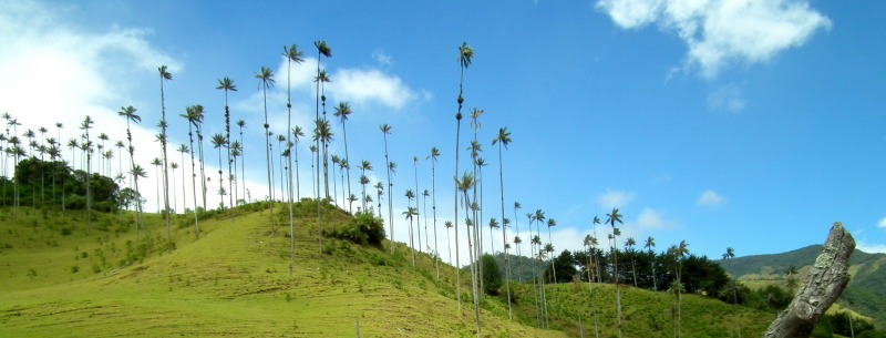Cocora Valley Colombia