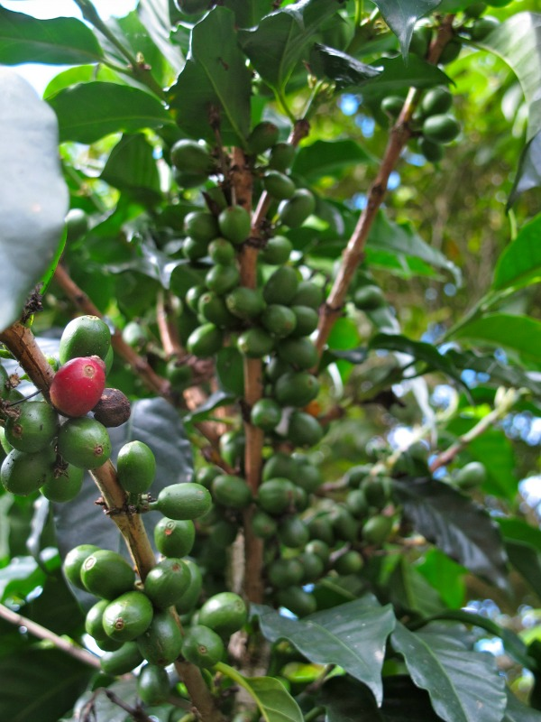 New Wave Coffee Culture in Colombia