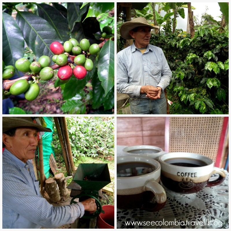 Coffee Tibacuy Colombia
