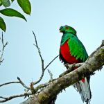 Global Big Day 2017: Colombia's date with birding destiny