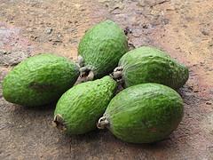 Feijoa fruit Colombia