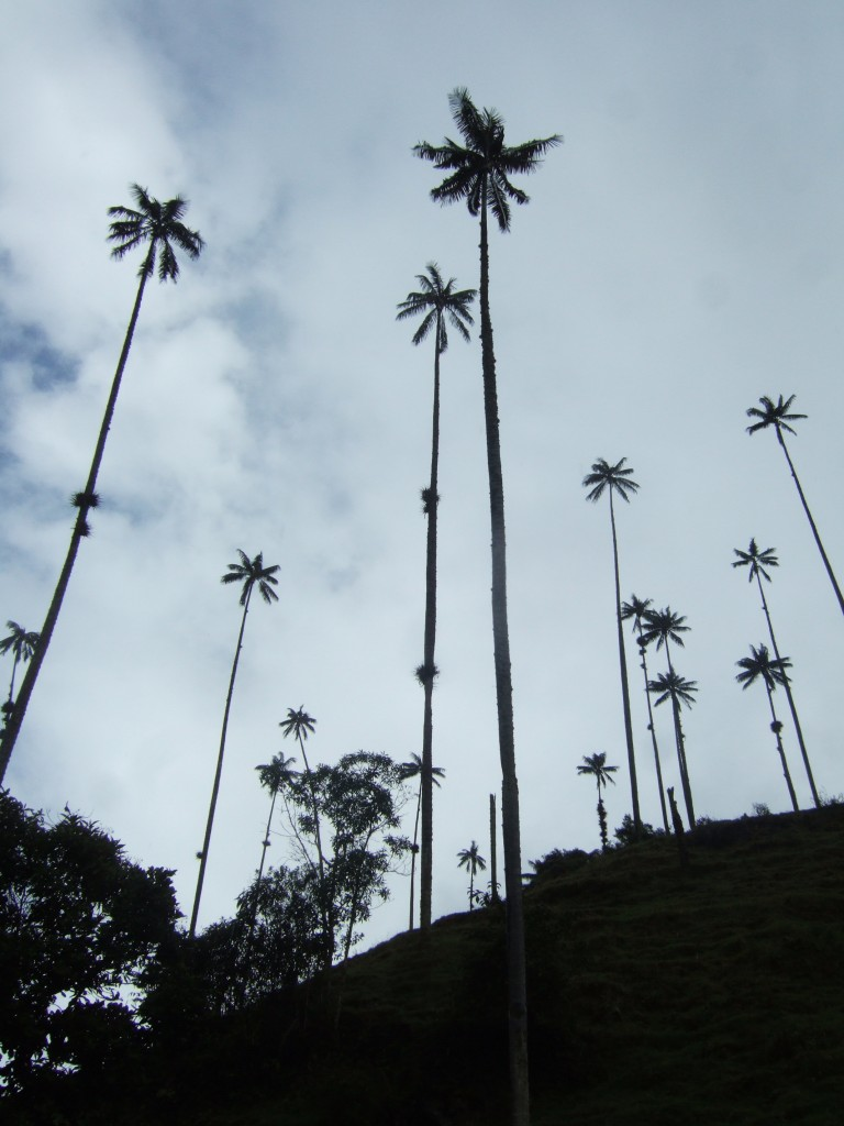 Cocora Valley, in the Coffee Region