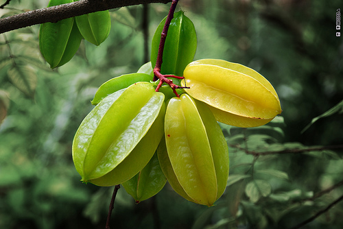 Carambola fruit Colombia