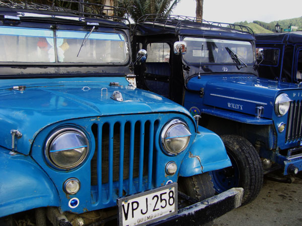 A group of Willys