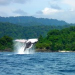 Top 5 Natural Spectacles in Colombia