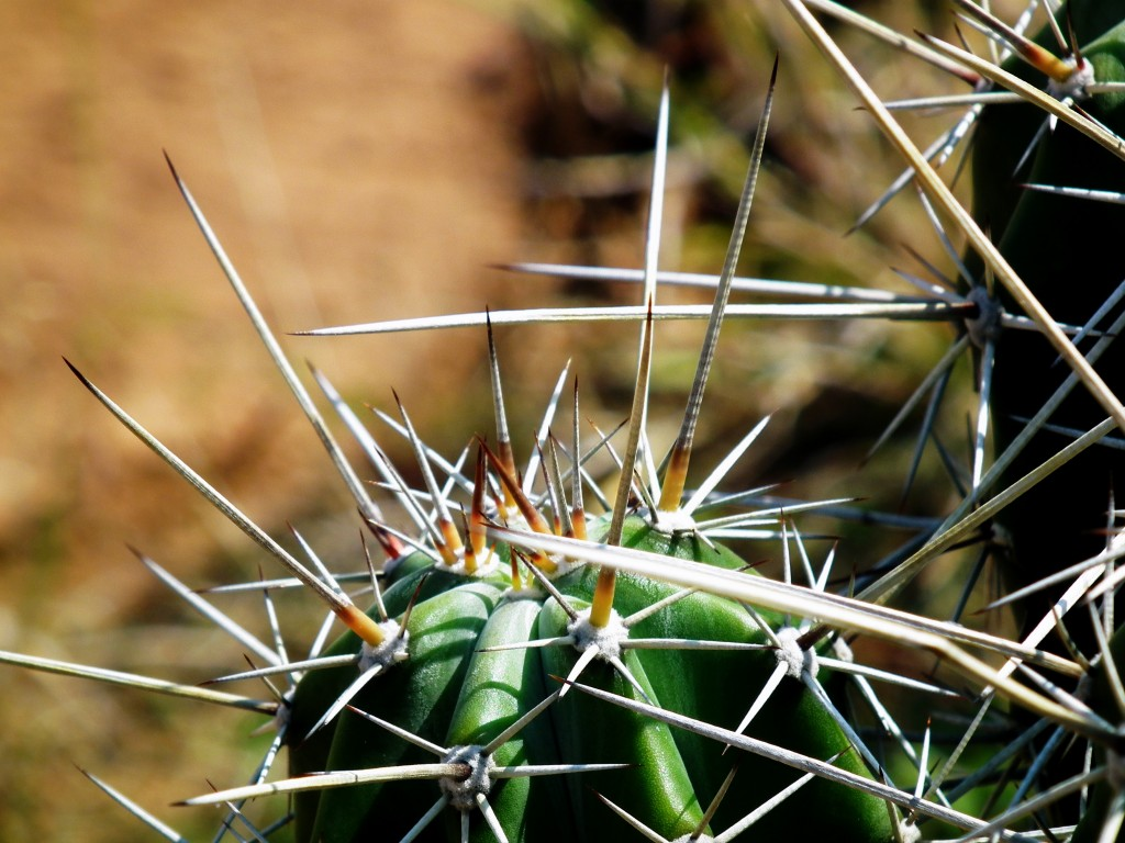 It's not all fun and games...watch out for the cacti!