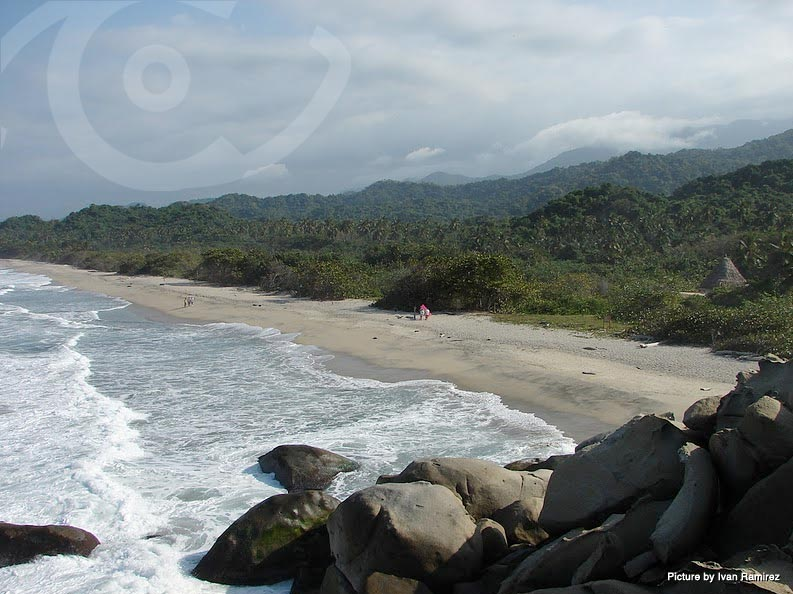From the beaches to the mountains, Tayrona National Park is a Colombian bird watching highlight