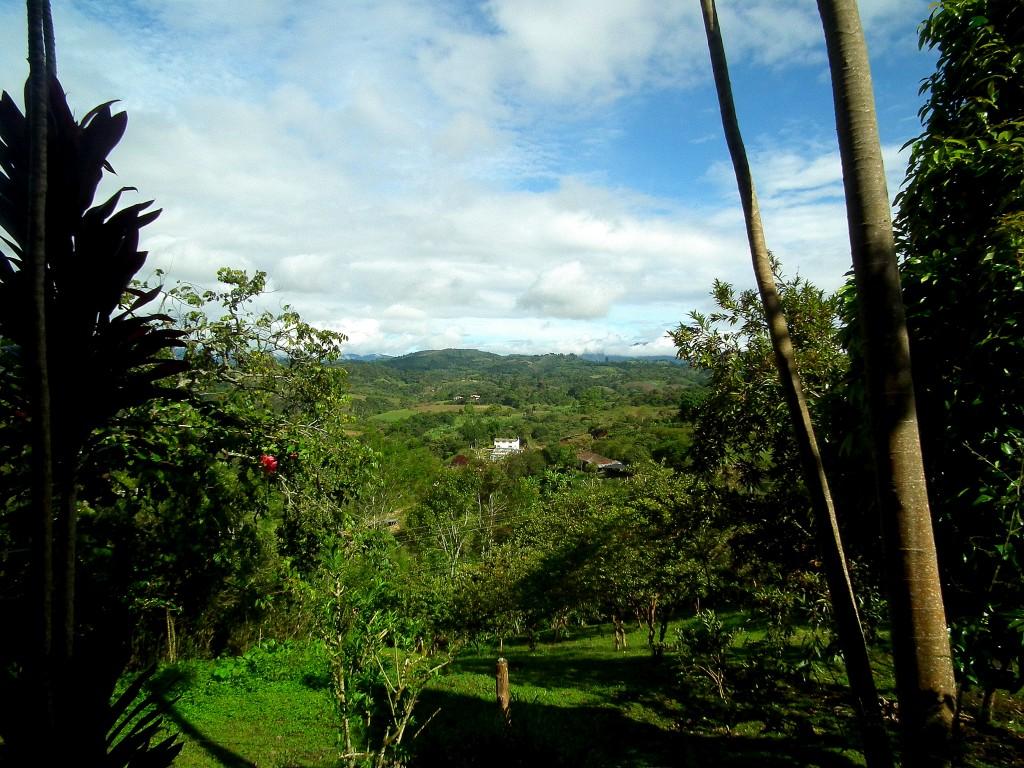 The view from one of Casa de Francois' many hammocks