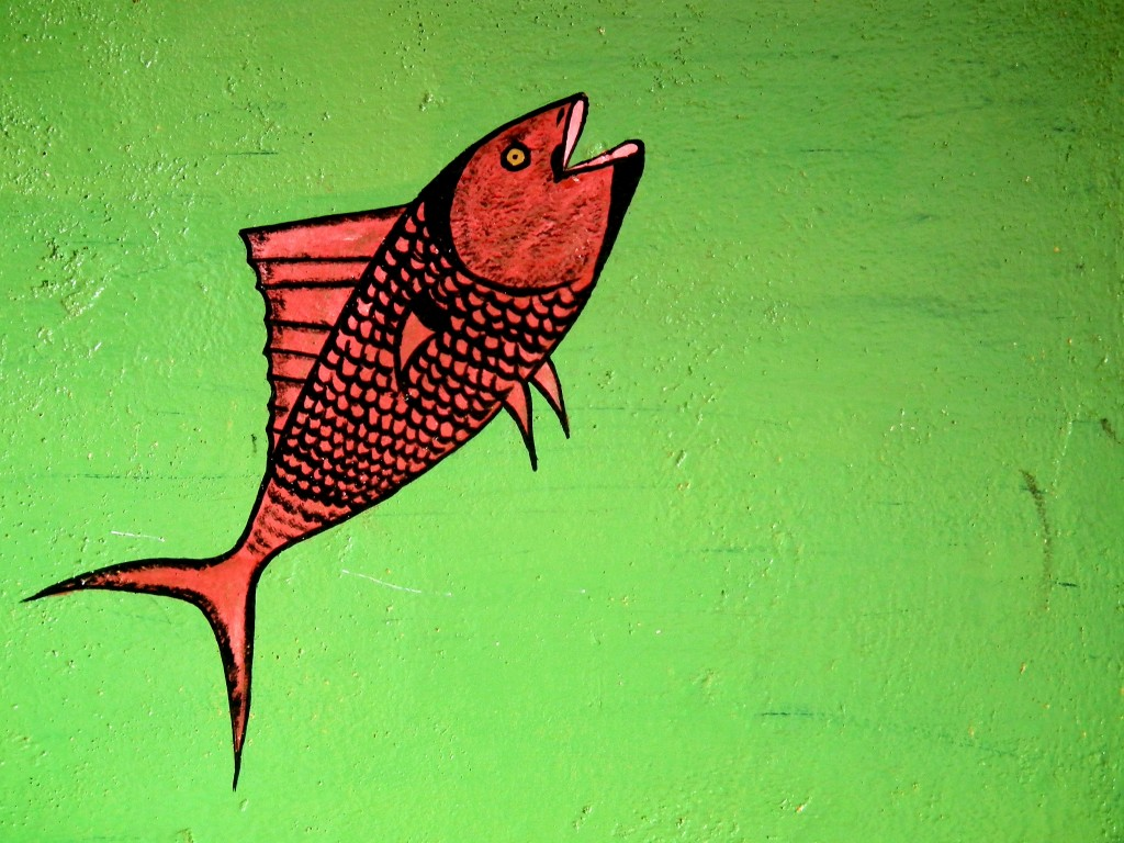 Cupurgana graffiti - eat them or snorkel with them...your call