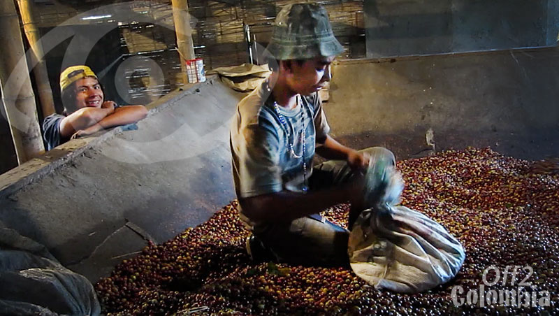 Chinchina Coffee Finca