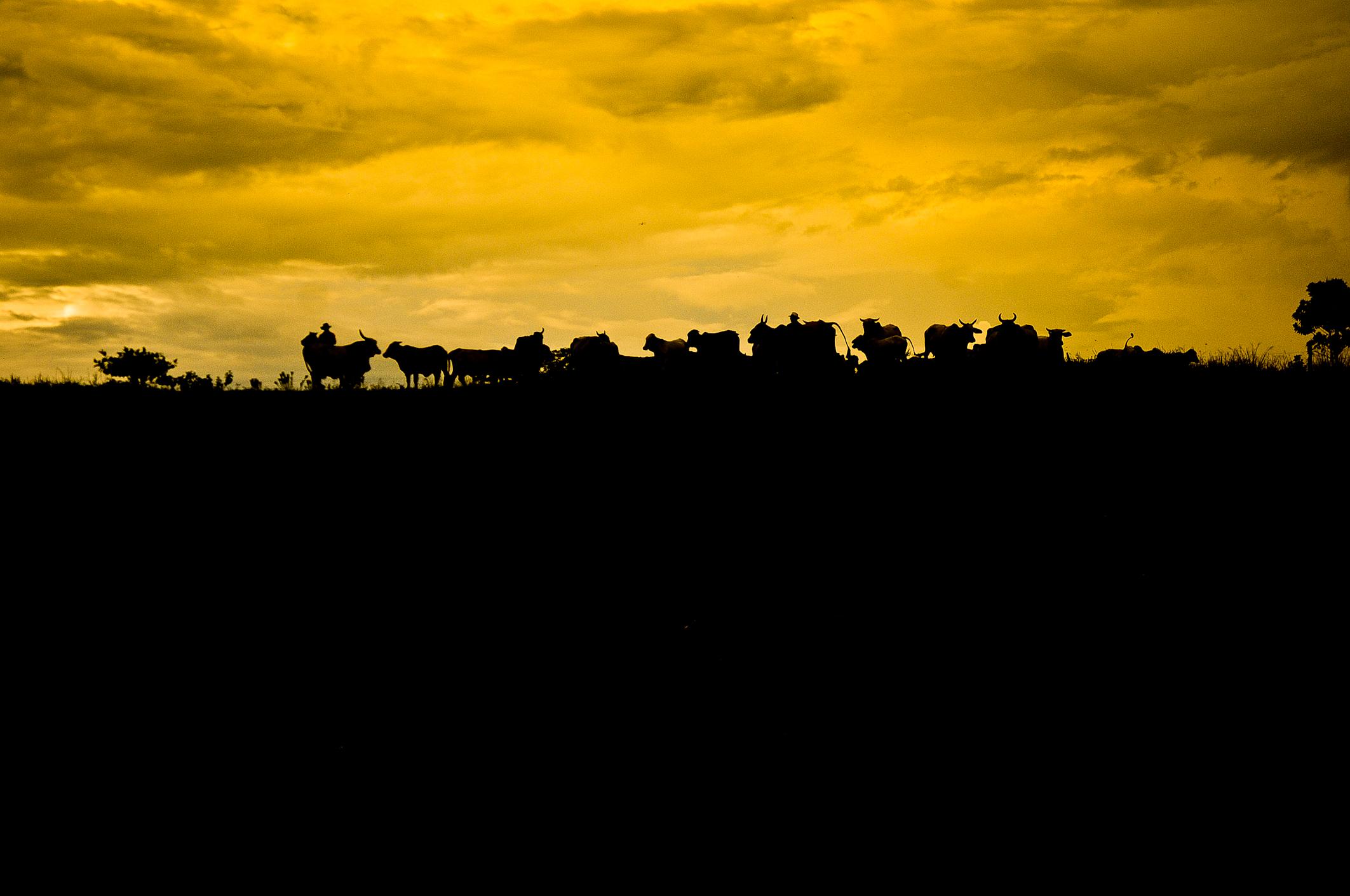 Los Llanos Colombia, Josmi Amin Martelo