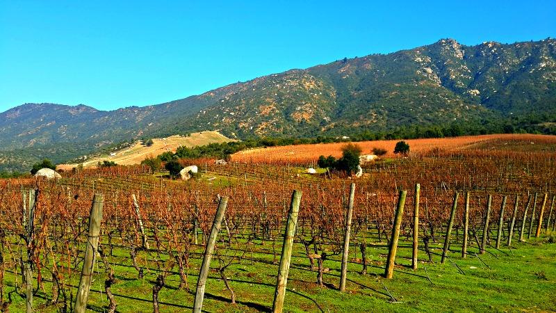 Valle de Colchagua Vinos Chile