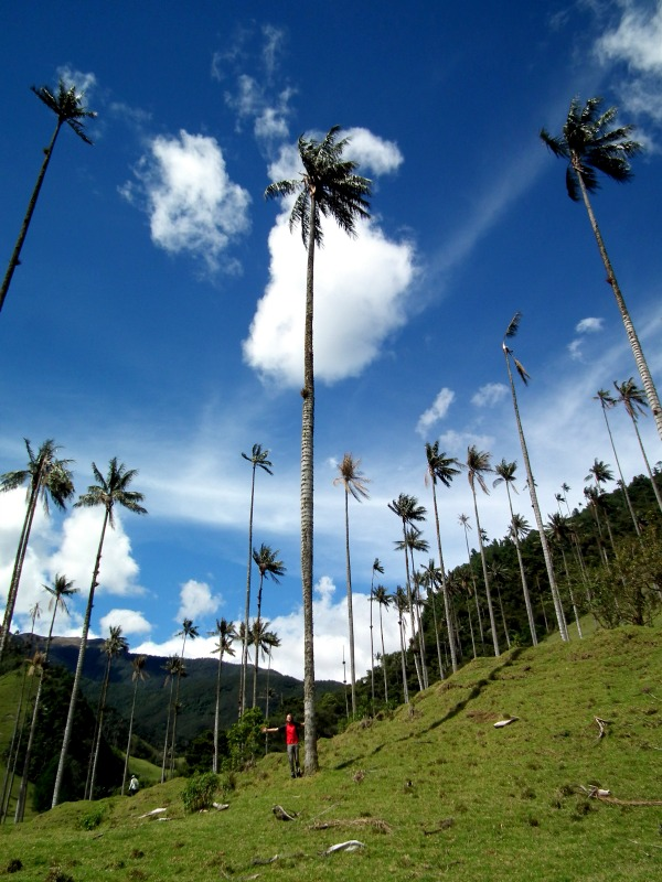 Chris and wax palm in Cocora