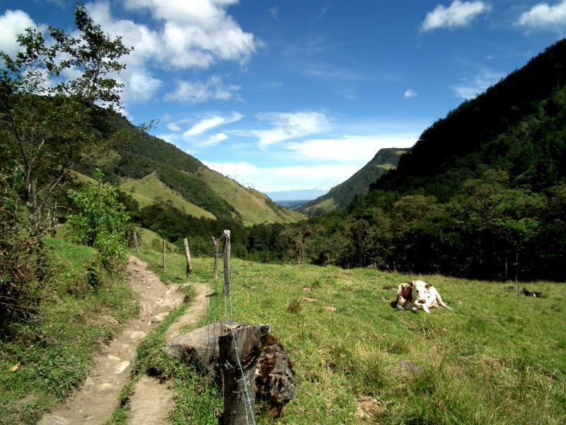 Cocora Valley Scenery