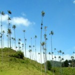 The Cocora Valley: One of Colombia's Natural Wonders