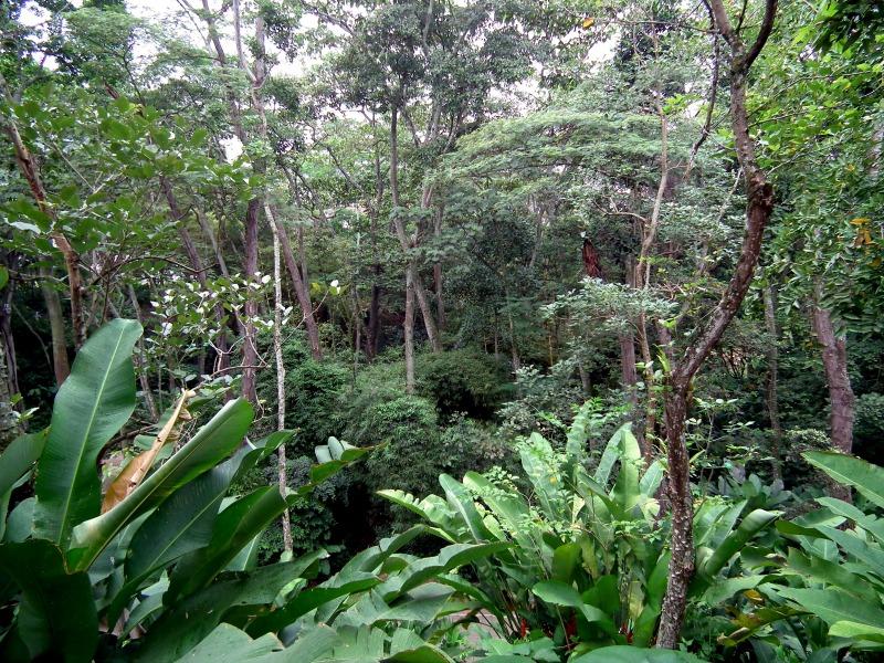 Parque Ecologico La Flora