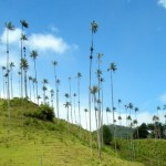 Salento and the Cocora Valley: A Photo Gallery