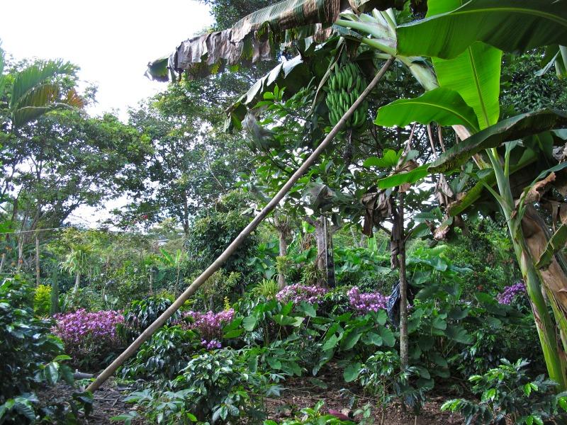 Colombian Coffee Plantation