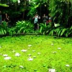 José Celestino Mutis Botanical Garden, Bogotá