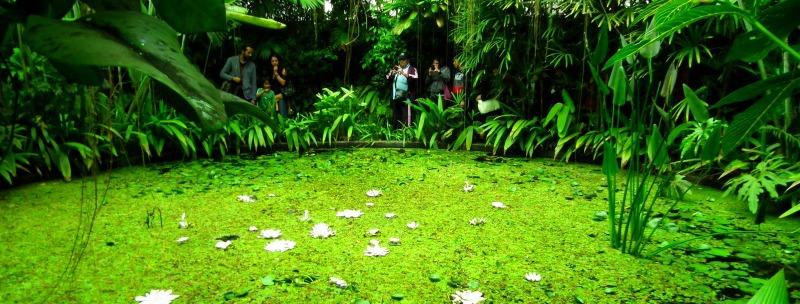 José Celestino Mutis Botanical Gardens