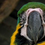 Paway Centro Ecoturistico Amazónico, Mocoa