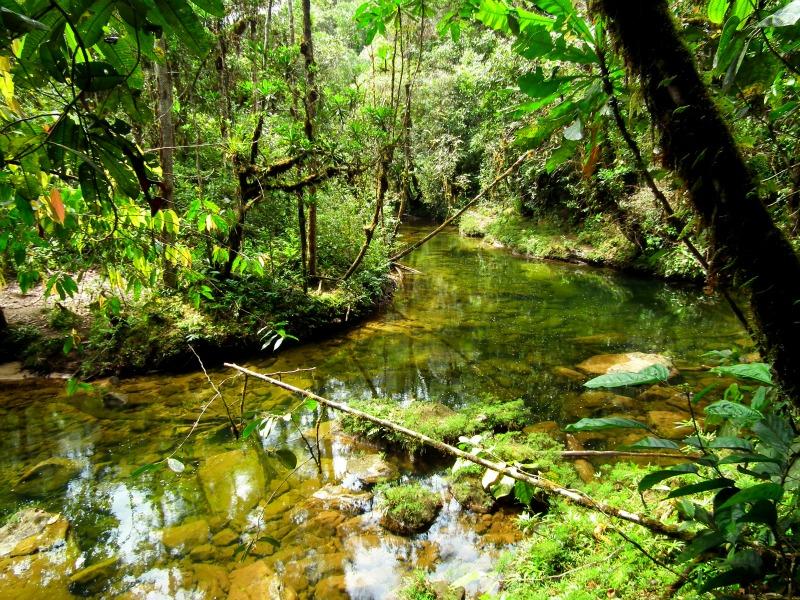 Mocoa Putumayo Jungle