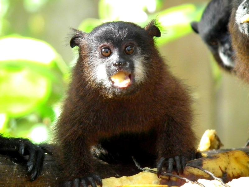 Mocoa Putumayo wildlife