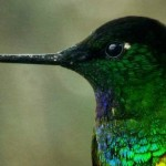 Photo Gallery: Hummingbirds of Colombia by Andres Delgado