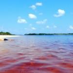 Visit the Estrella Fluvial del Sur & the Beaches of the Atabapo River