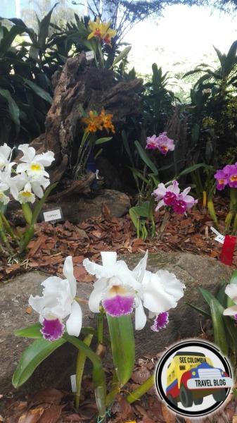 feria de flores 2016 medellin orquideas pajaros y flores