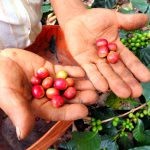 """WakeCup""…to Colombia's Best Coffee Tour in Pijao, Quindio"