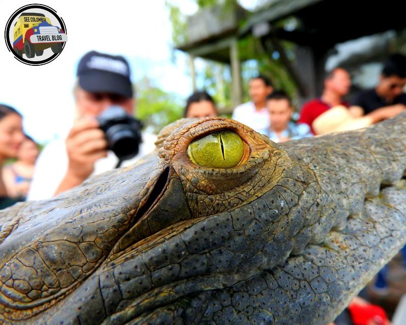 wisirare casanare caiman orinoco