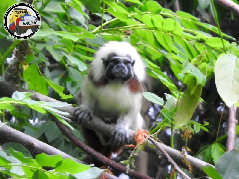 monkey tayrona park