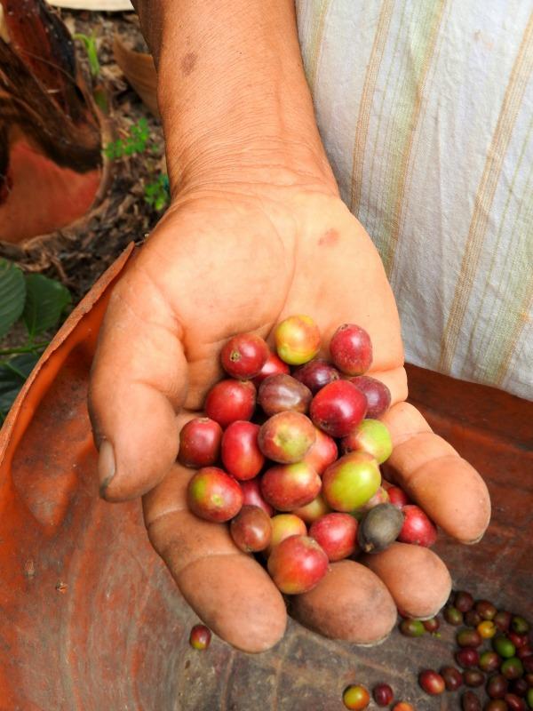 experiencia cafetera quindio colombia