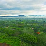 Flying high over the Colombian Coffee Region in a Hot Air Balloon