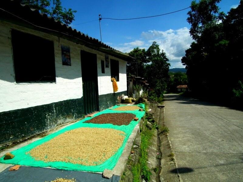 Coffee Santander Colombia