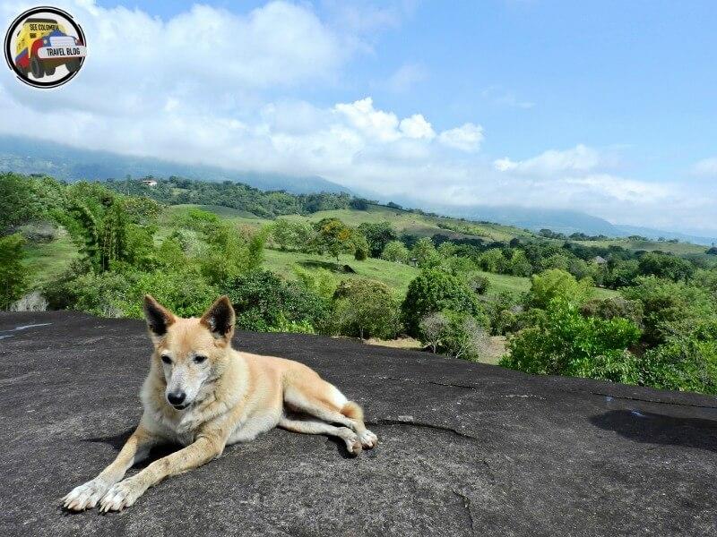 Campamento lechuga Támesis Antioquia