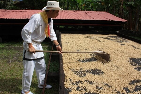 Colombian coffee farmers working during the coffee process