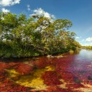 Caño Cristales Tour Colombia